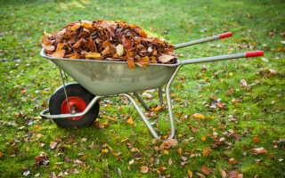 Куда с пользой применить опавшую листву осенью: 10 идей