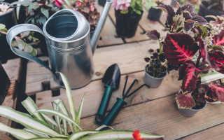 Современный инвентарь для ухода за вашим садом