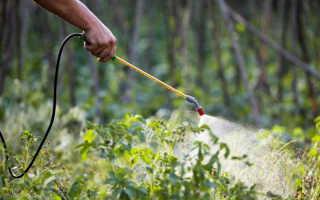 Обработай огород — и картофель весь взойдет
