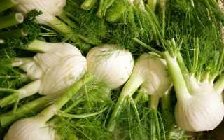 О выращивании фенхеля, лечебные свойства и применение
