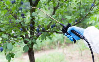 Весенняя обработка садовых кустарников от распространенных болезней и вредителей: рекомендуемые препараты