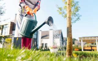 Весенняя подкормка плодовых деревьев: чем, как и когда