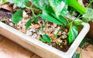 Удобрение домашних растений