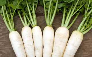 Выращивание редьки: дайкон, лобо, листовая(салатная)