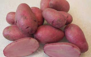 Цветной картофель: не просто необычно, но и очень полезно