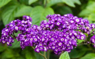 8 ярких и неприхотливых однолетников, которые обильно и продолжительно цветут