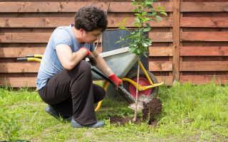 Как я готовлю молодые деревья к зимовке. Какие работы обязательно выполняю осенью для защиты моего сада