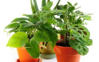 Подкормки для обильного цветения домашних растений