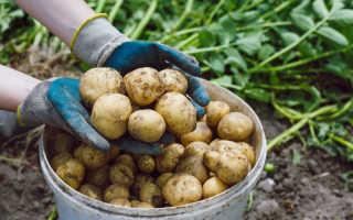 Удобрения, которые необходимо вносить после уборки картофеля осенью