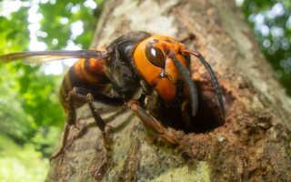 Самые опасные насекомые, которых можно встретить на даче — врагов надо знать «в лицо»