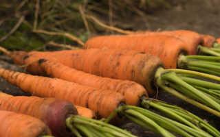 Какие сорта моркови больше подходят для зимнего хранения — 7 отличных вариантов