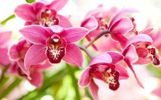 Частое и обильное цветение орхидей: основные правила