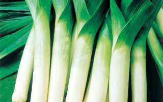 Выращивание лука-порея
