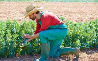 Правила верного и результативного севооборота растений в огороде