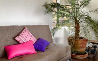Финиковая пальма: как вырастить экзотическое растение из косточки