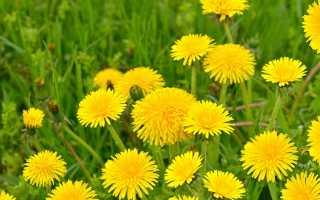 Использование органических удобрений на основе растений