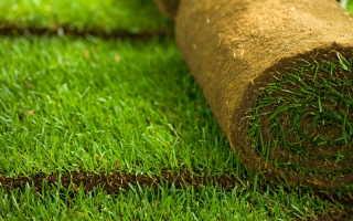 Пошаговая инструкция по укладке рулонного газона