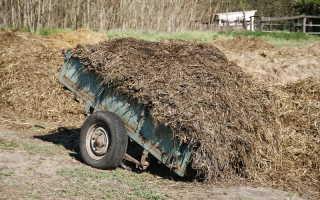 Можно ли осенью вносить навоз? Мой ответ положительный, и мои растения чувствуют себя прекрасно