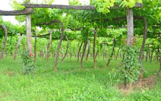 Как сделать опору под виноград своими руками
