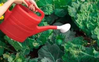 Советы по получению обильного урожая капусты