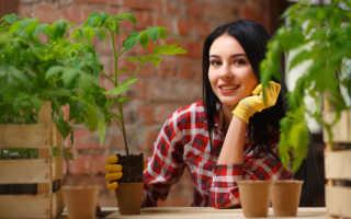 Народные приметы и лунный календарь в помощь садоводу