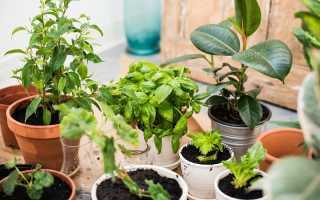 4 самых нужных для каждого дома комнатных растений