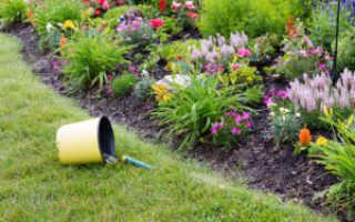 Советы по выращиванию, посадке и уходе за цветами