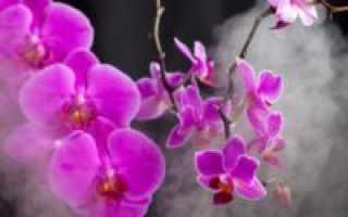 Орхидеи: советы по хранению в зимний период