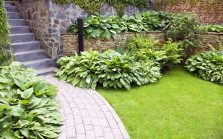 Озеленение территории: советы,выбор растений