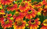 Цветы, рассаду которых необходимо посадить заранее. Ноябрь — самое подходящее время