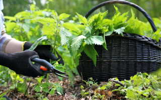 Дикорастущие растения, пригодные к употреблению в пищу