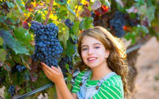 Осенняя подкормка винограда: правила проведения
