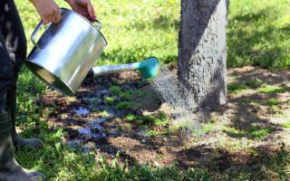 Летний уход за садом: полив и подкормка