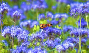 Весенний посев сидератов — какие травы выбрать для теплицы и огорода