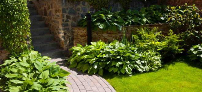 Как не испортить садовую дорожку: особенности выбора растений для посадки, какие растения не подходят для украшения дорожек