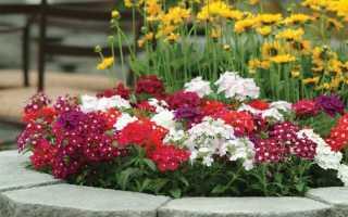 Какие декоративные растения сеют на рассаду зимой