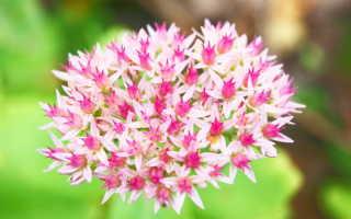 Цветник для занятых дачников: наиболее неприхотливые цветы