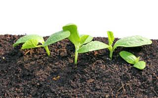 Теплые грядки — секрет успешного выращивания огурцов