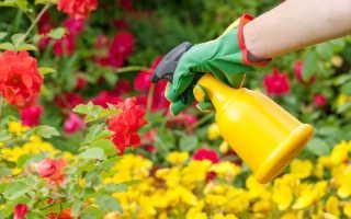 Вредители роз: как распознать и избавиться