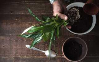 Какими растениями разнообразить домашний интерьер