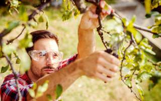Частые ошибки при проведении обрезки плодовых деревьев