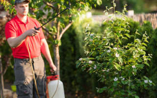 Рекомендации по обработке яблонь и груш от вредителей в апреле