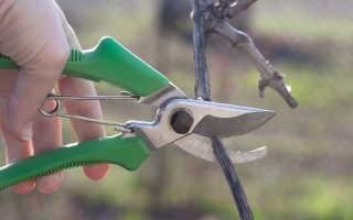 Как провести летнюю обрезку винограда и сделать растение сильнее