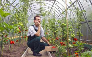 Как вырастить в теплице помидоры и снять обильный урожай