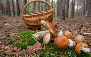 Съедобные грибы с белой ножкой и разными цветами шляпок (белой, коричневой)