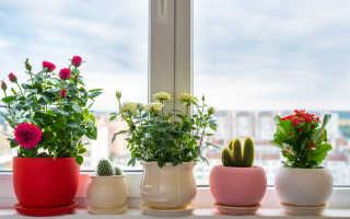 Советы по обрезке садовых и комнатных роз от опытного садовода