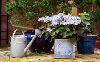 Моя пышно цветущая клумба осенью: без астр, гладиолусов и бархатцев