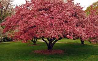 Современные виды и сорта декоративных деревьев и кустарников