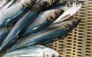 Как при покупке селедки выбрать рыбину с икрой