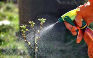 Опрыскивание деревьев и кустарников весной